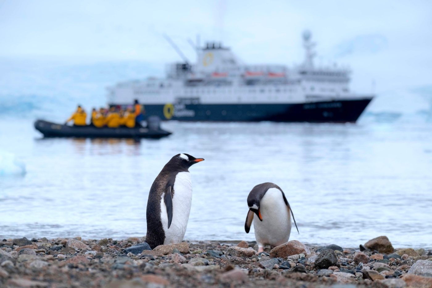 Antarctica Penguins and ship Credit Derek Oyen Unsplash