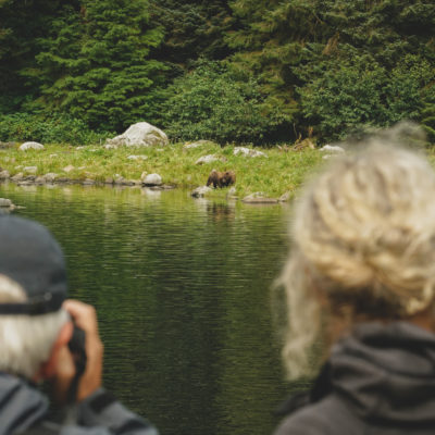 Alaska Guests spot brown bears on shore Credit Uncruise